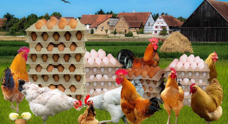 Employer branding. Co było pierwsze: jajko czykura?